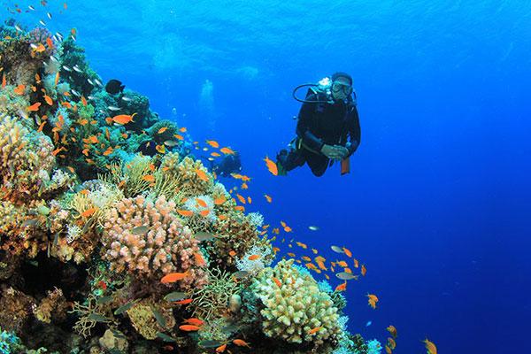 Pleasure Dives